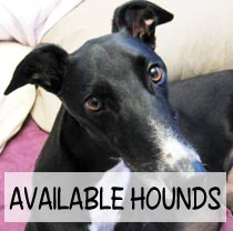 Available Hounds