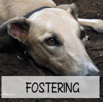 fostering